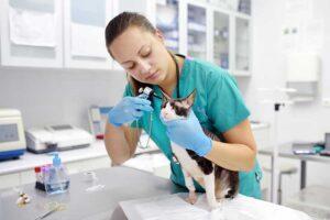 preventive veterinary services