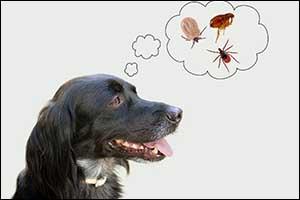 preventive vet treatments fall river, MA