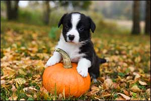 Pumpkin Benefits for Dogs in Massachusetts