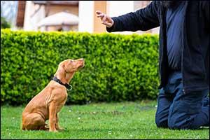 puppy training programs