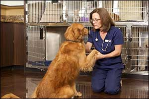 quality vet care for fall river pets