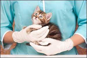Regular Check-Up at South Coast Veterinarian