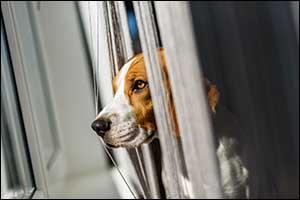 veterinary care in Massachusetts
