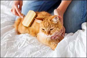 seasonal grooming MA pets