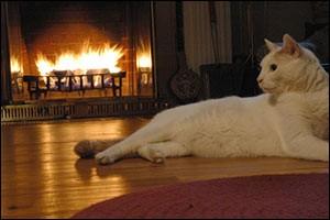 seasonal-pet-safety