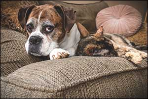 senior pet care in dartmouth