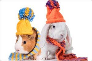 New England Winter Small Pet Care