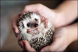 vet care for small exotic pets in southeastern massachusetts