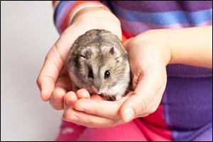 small-pets
