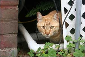 southcoast feral cats