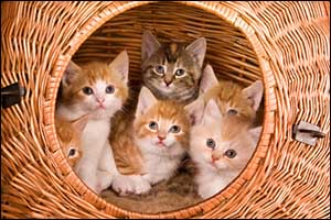 Spay Neuter Pets in New Bedford, Dartmouth, Fall River Massachusetts