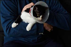new bedford spay and neuter program for pets