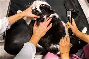 Specialized Veterinary Services in Dartmouth