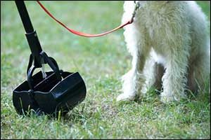 Spring Tips for Pets in Dartmouth, New Bedford, and Fall River