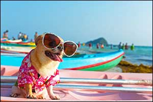 summer care for pets in southeastern massachusetts