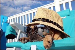 summer-dog-trips