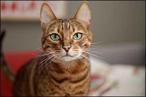 telemedicine veterinary care in dartmouth
