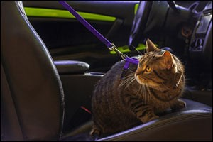 traveling-with-pets