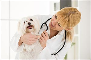 veterinary-care-massachusetts