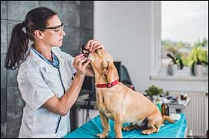 South Coast Veterinary Dentistry