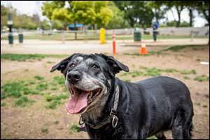 Veterinary for Senior Pets in Westport