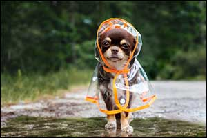 weather warnings for westport pet owners