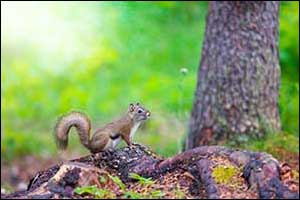 pets and wildlife encounters in Massachusetts