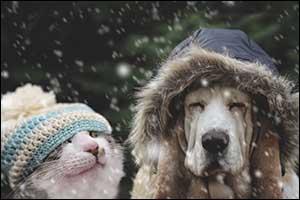 Winter Care Tips in MA