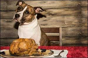 Changes in Diet for Pets in Winter