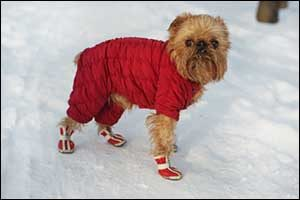 Winter Safety for Pets in New Bedford
